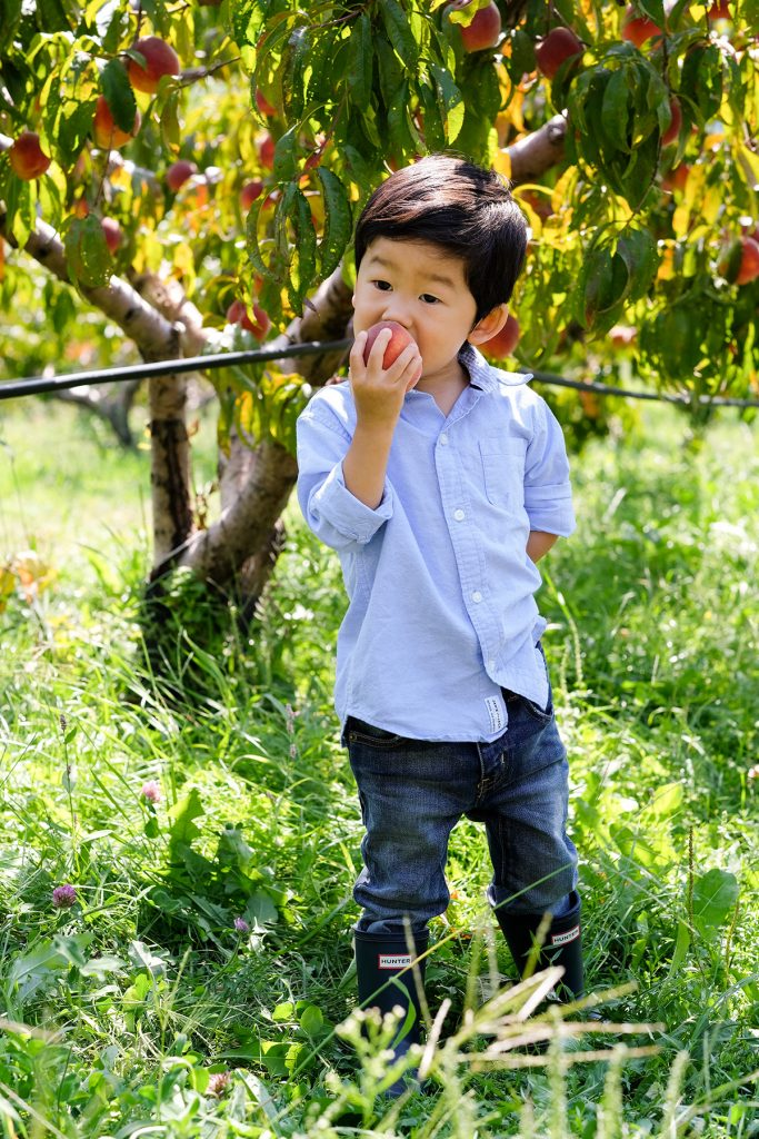 Apple picking with toddlers